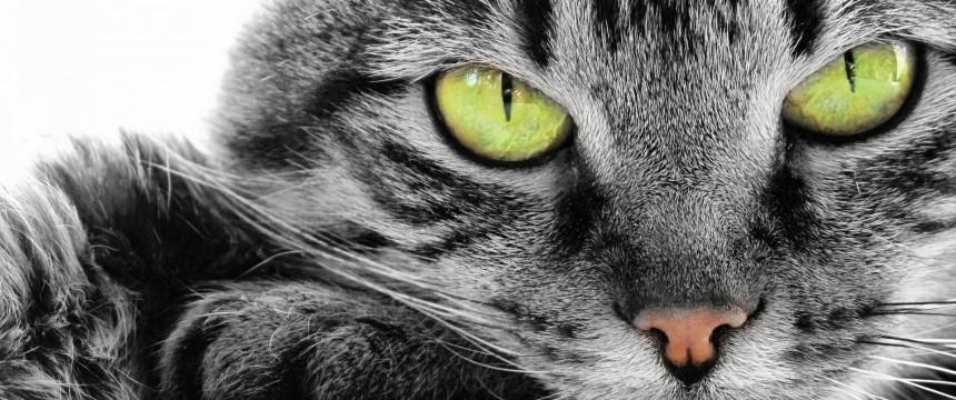 Green-Eye-Cat-860x360.jpg